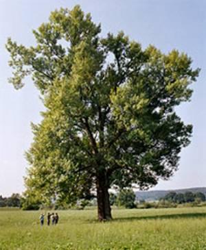 Tu árbol